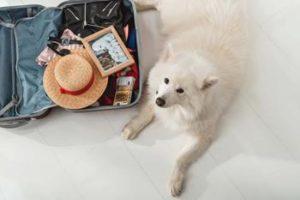 Viajas con Mascotas