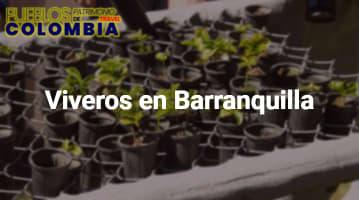 Viveros en Barranquilla