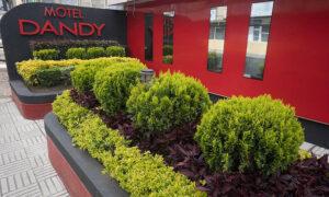 motel dandy