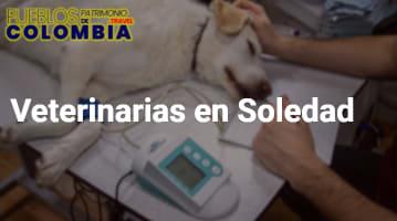 Veterinarias en Soledad