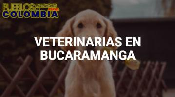 Veterinarias en Bucaramanga