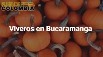 Viveros en Bucaramanga
